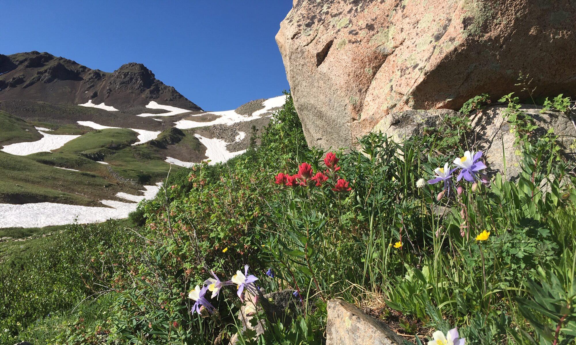 Pure Mountain Living